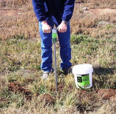 kaput d gopher bait applicator being used to probe for tunnels and inject kaput