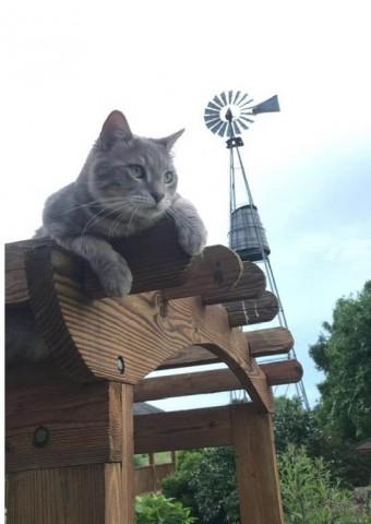 Gus the cat.